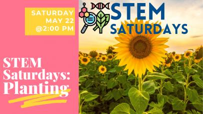 Sunflower and STEM Saturdays logo