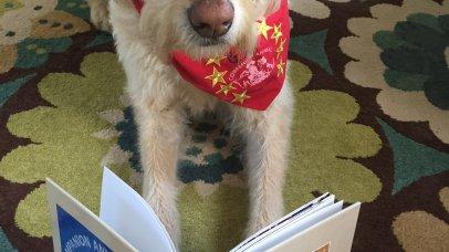 Companion Animal Program dog-in-training Chowda