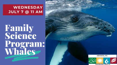 Family Science Programs: Whales with image of whale and text